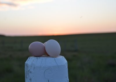 Eggs-trodinary Sunset